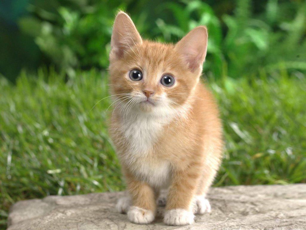 "Image result for cat vastu tips"",nari"