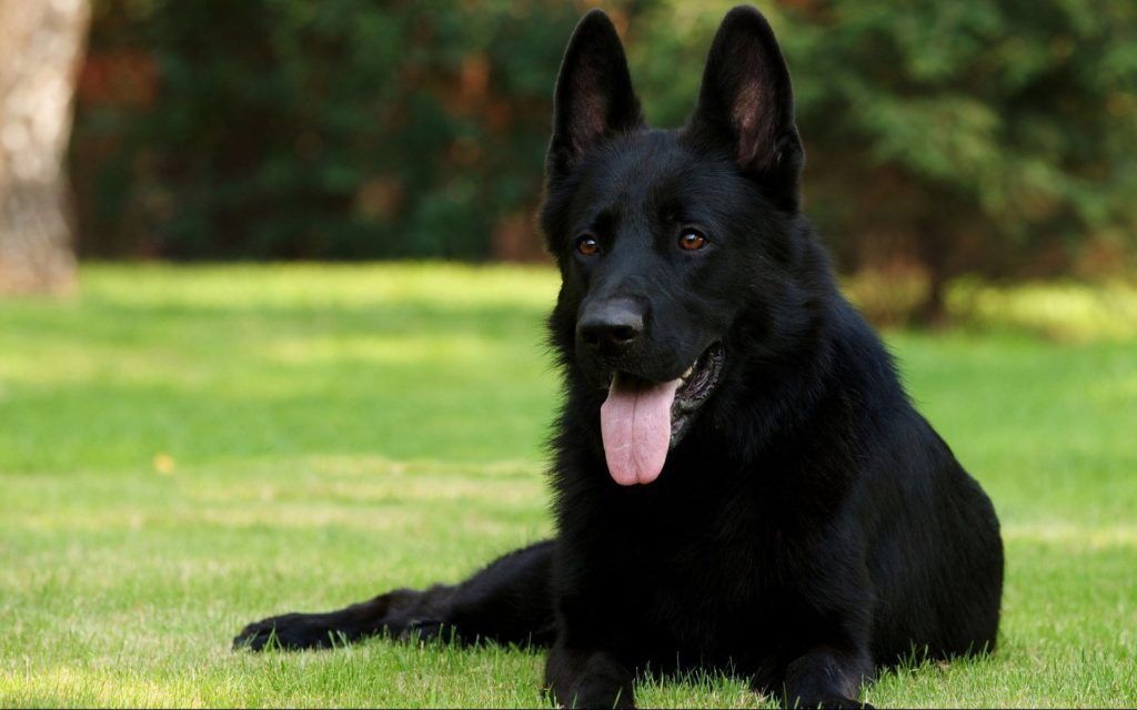 pictures-of-dogs200