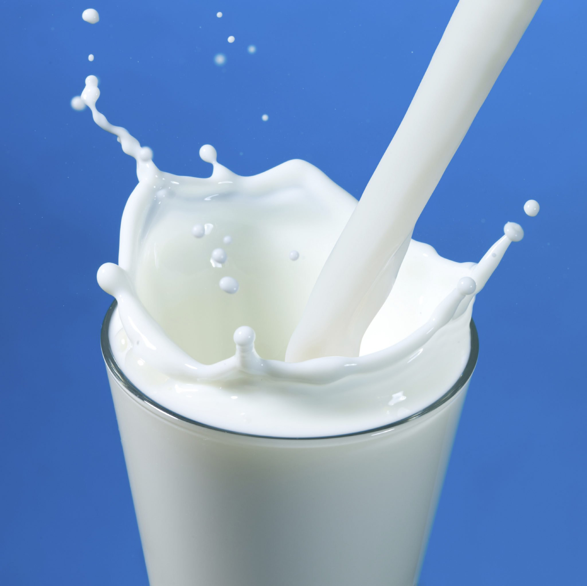 pouring milk in a glass isolated against white background
