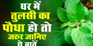 tulsi-plant-benefits-hindi