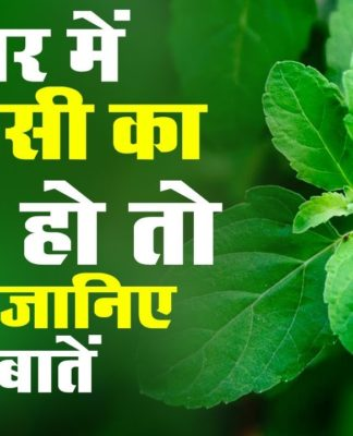 tulsi-plant-benefits-hindi