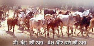 benefits-indian-desi-cow