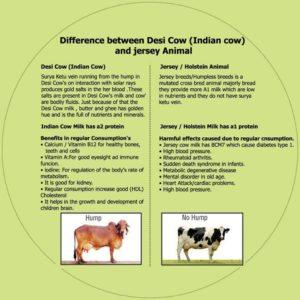 desi-cow-information-milk-benefits